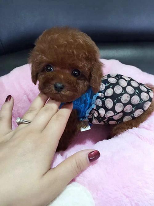 晶晶宠物犬.jpg
