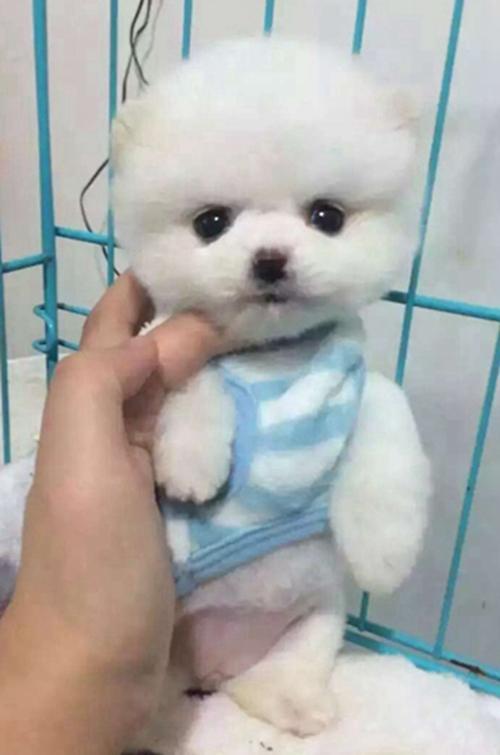 晶晶宠物犬2.jpg