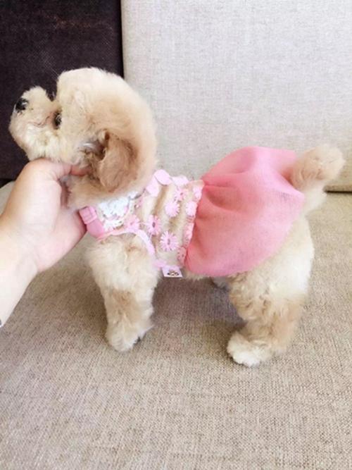 晶晶宠物犬3.jpg