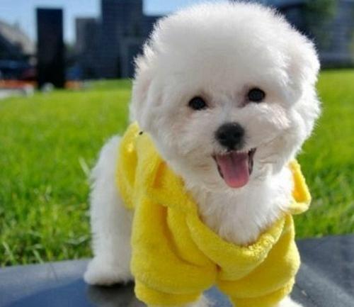 晶晶宠物犬4.jpg