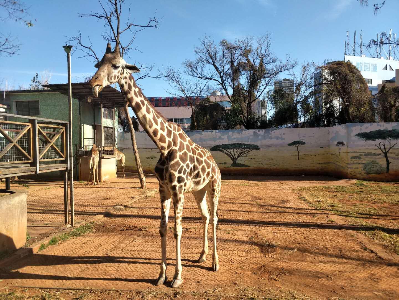 动物园2.jpg