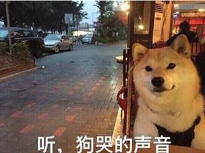 听狗哭的声音.jpg