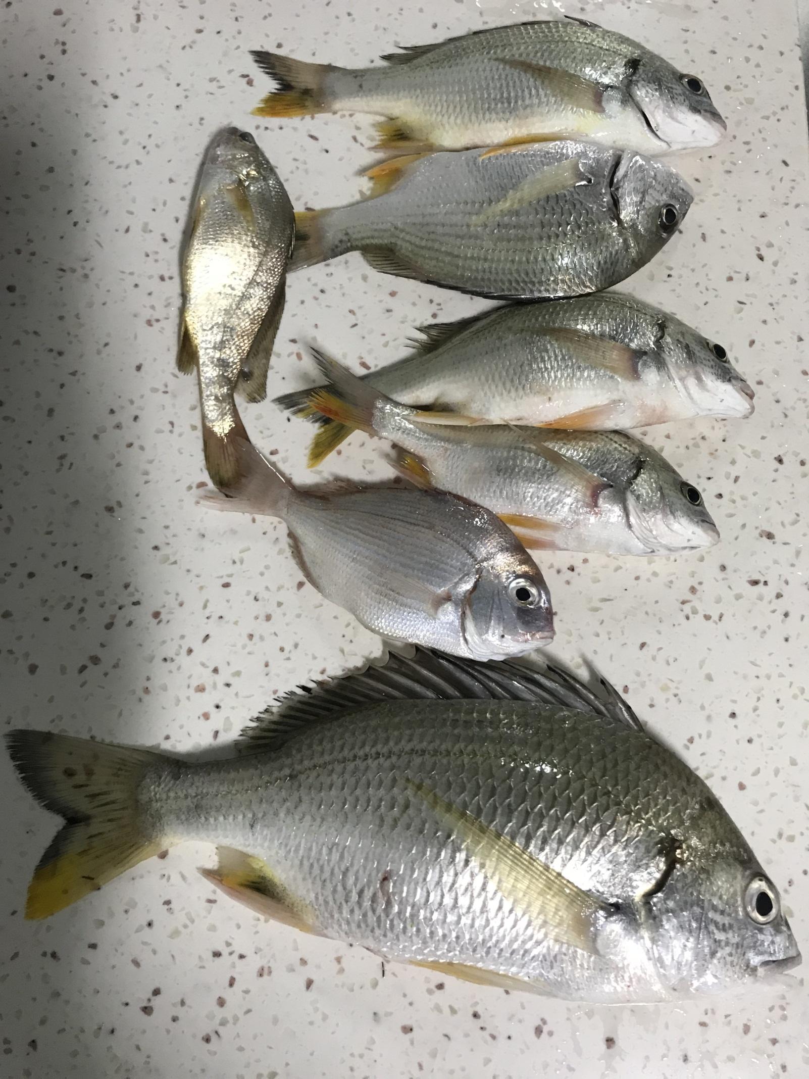 鱼1.jpg