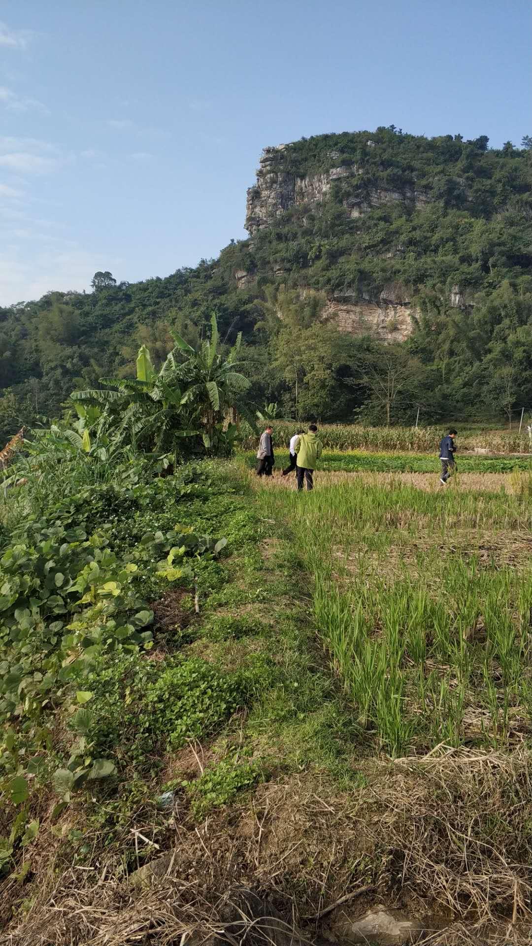 一些文化,考古,学者经常穿梭于感桑的田野上。